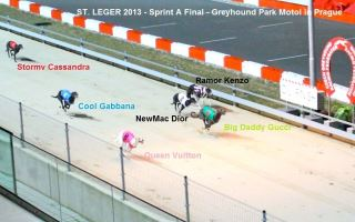 GREYHOUND PARK MOTOL